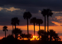 Sunset in the Palms, FL