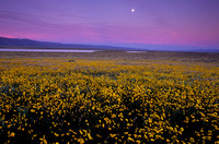 Carrizo Plain Moonrise