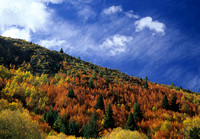 Autumn Colors in Arrowtown #1